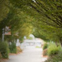 Trees along a campus walkway