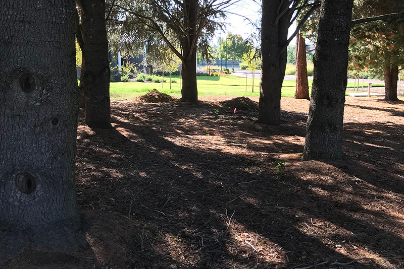 Trees at Rock Creek Campus from in the forest