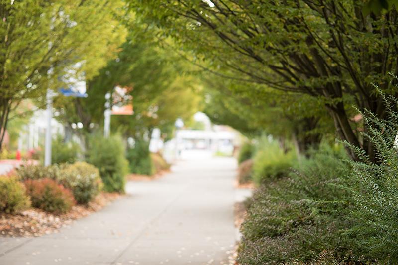 Trees at Southeast Campus along a walkway