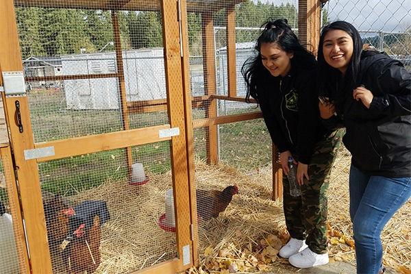 Students looking at chickens in a coop