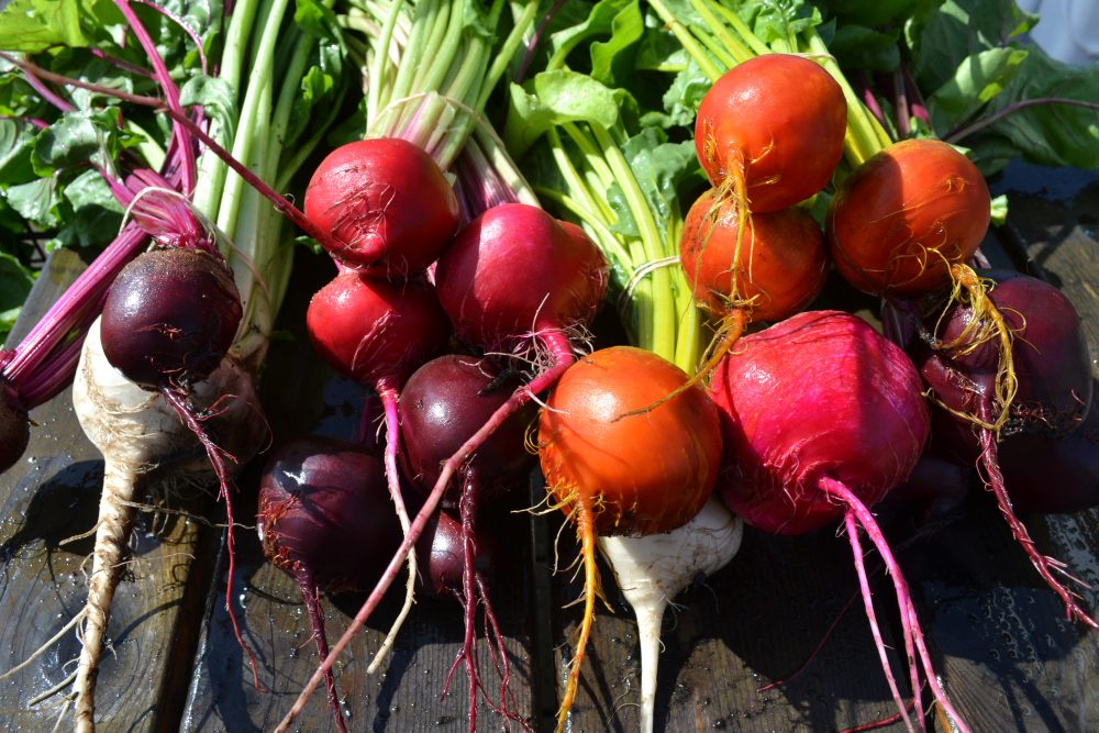 Beets from PCC Learning Garden!