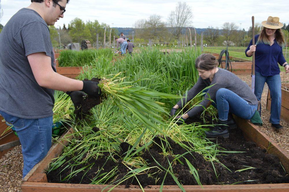 PCC Learning GardenEarth Week Work Party 2018