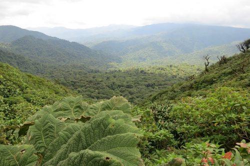 image of Monteverde