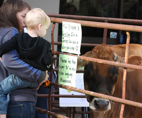 Mother holding small boy, looking at cow in petting zoo