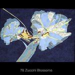 Zuccini Blossoms