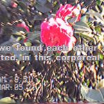 """A blurry image of a neon pink flower as it hangs almost in the center of the frame, surrounded by leaves. The text in the middle of the screen reads: """"and we found each other again / reunited, in this corporeal form."""" The timestamp on the video says that it was taken March 05th, 2021 at 9:51am."""