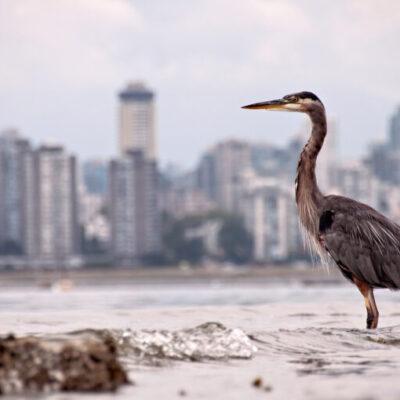 Urban Wildlife Virtual Display