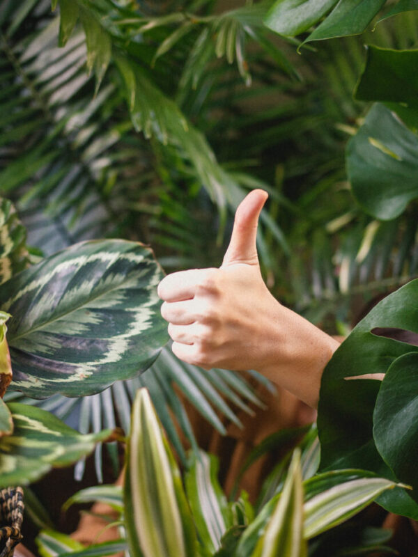 Indoor and Outdoor Plants that Enhance Small Spaces