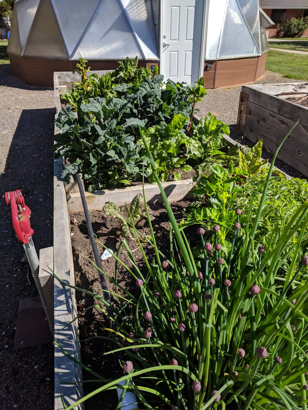raised beds with greens