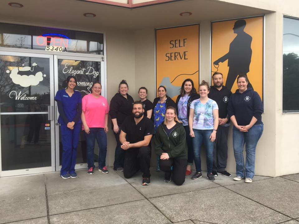 Fogo the dog is on the mend news at pcc student volunteers at the hillsboro elegant dog dog wash where they raised 2000 for a four solutioingenieria Images
