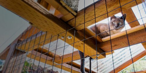 Cat in a catio