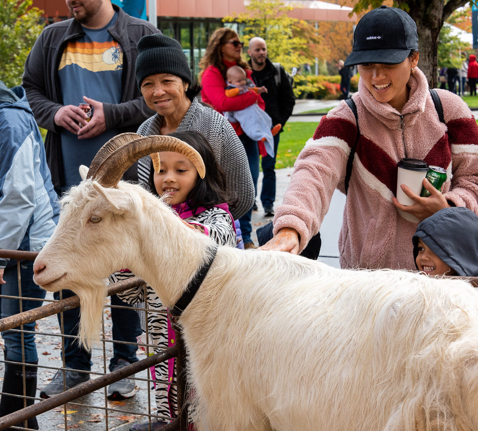 children and adults reaching to pet a goat