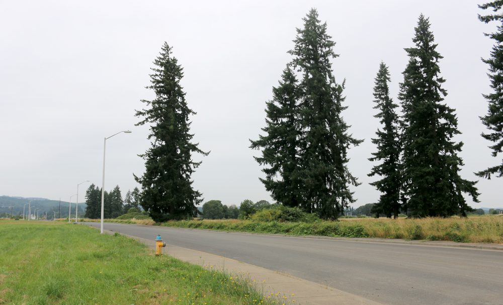Field parcel in Scappoose.
