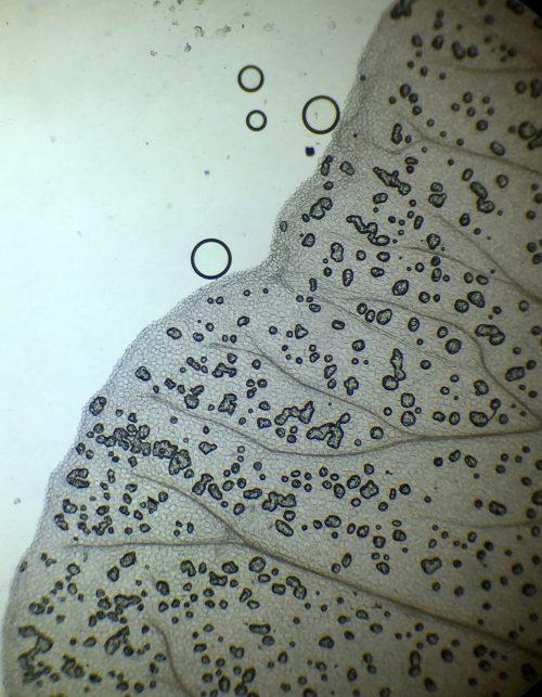 plant cells.