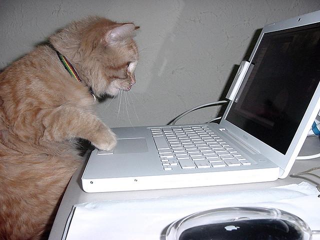 cat web designer
