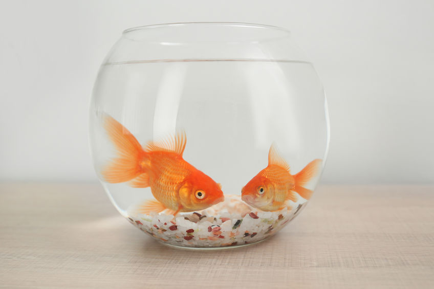 picture of fish bowl