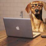Image of dog at a computer