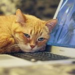 picture of cat with head on a laptop