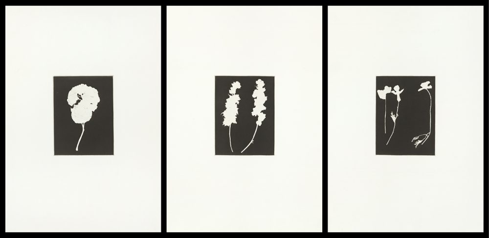 Group of three images of white flowers on a black background