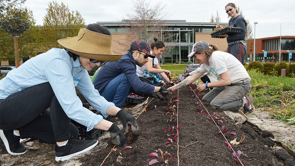 Students planting in the campus learning garden
