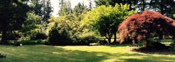 Beautiful green space on campus