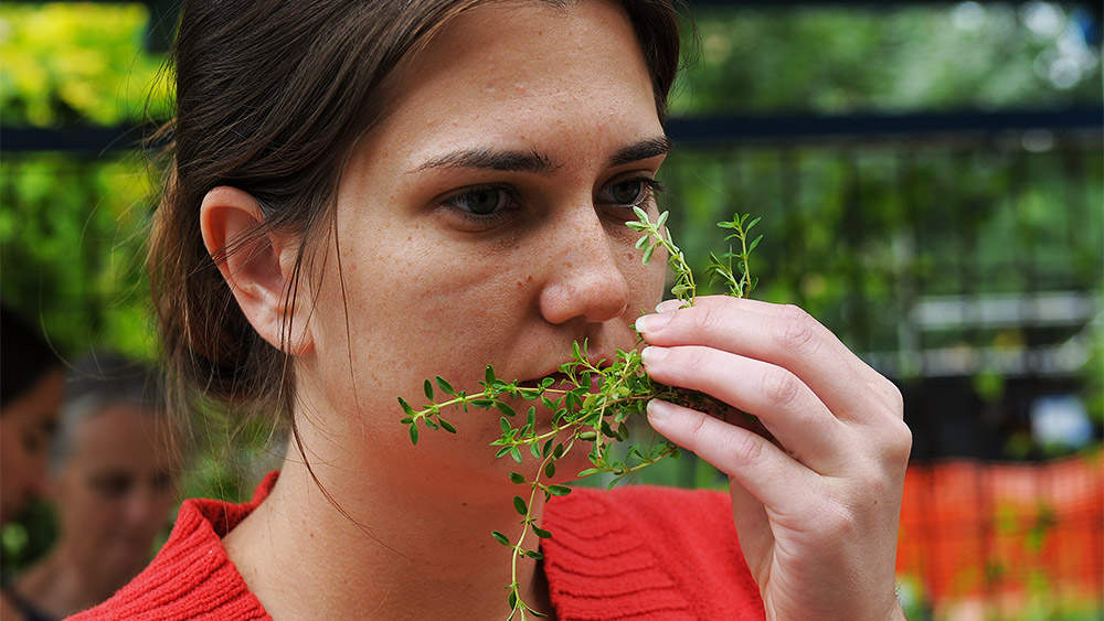 Gerontology student smelling an herb in the horticulture garden on campus