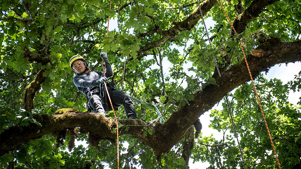 Student working high up in a tree