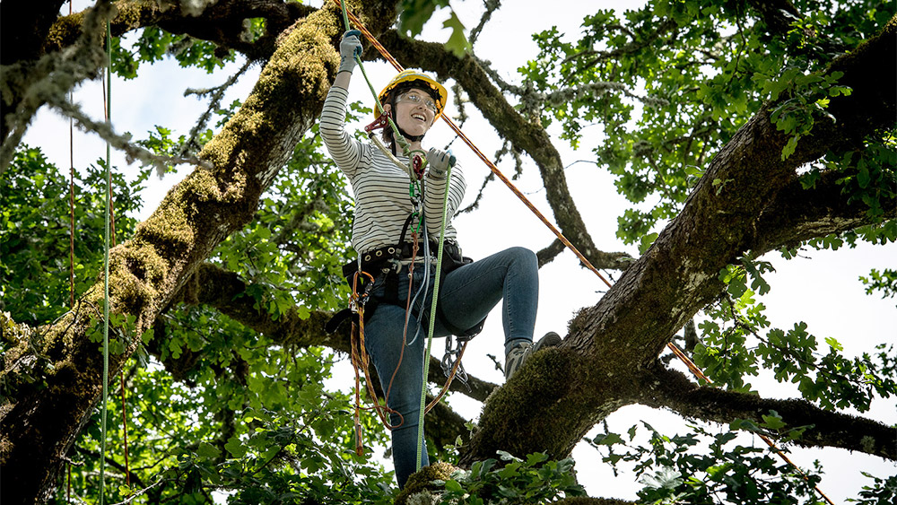 Student standing in a rope harness and helmet up in a tree and smiling