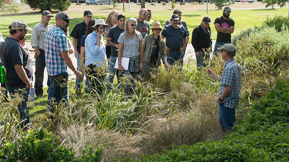 Students and instructor standing among grasses and discussing water quality landscaping