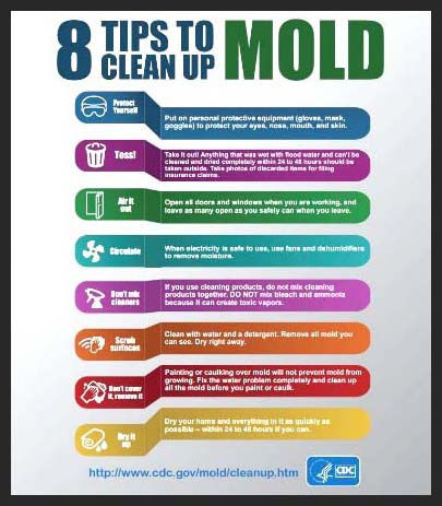 This is an infographic that discusses 8 tips for how to clean up mold. This image is also a link. Press Ctrl+Click to access this site.