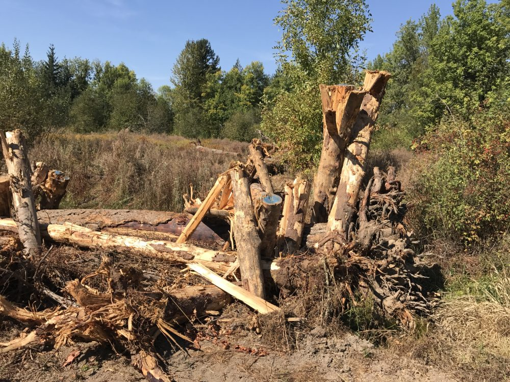 During the summer of 2017, our restoration partner, Clean Water Services, placed several large wood at locations in the Rock Creek floodplain to help slow down the water and trap sediment. The goal of this work is to store more water in the wetlands, improve water quality and provide habitat for wildlife.