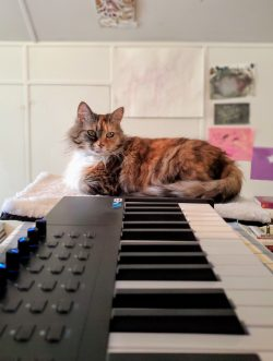 a cat lays next to a piano keyboard