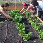 Rock Creek students work on Garden