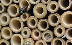 Tube style mason bee house