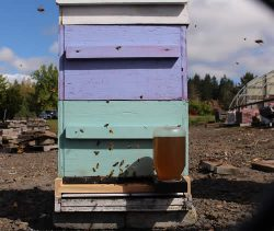 Rock Creek Campus Apiary