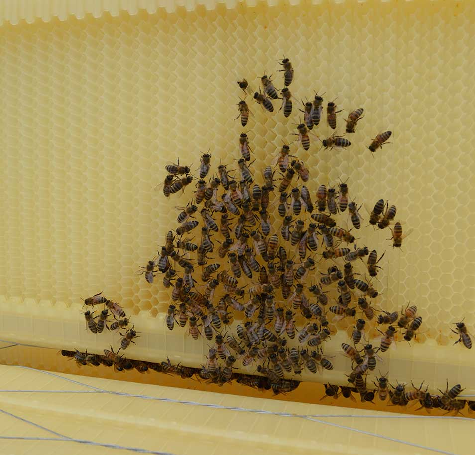 Bees and wax