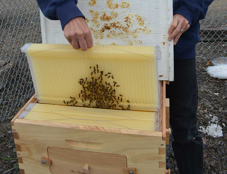 Bee hives and wax