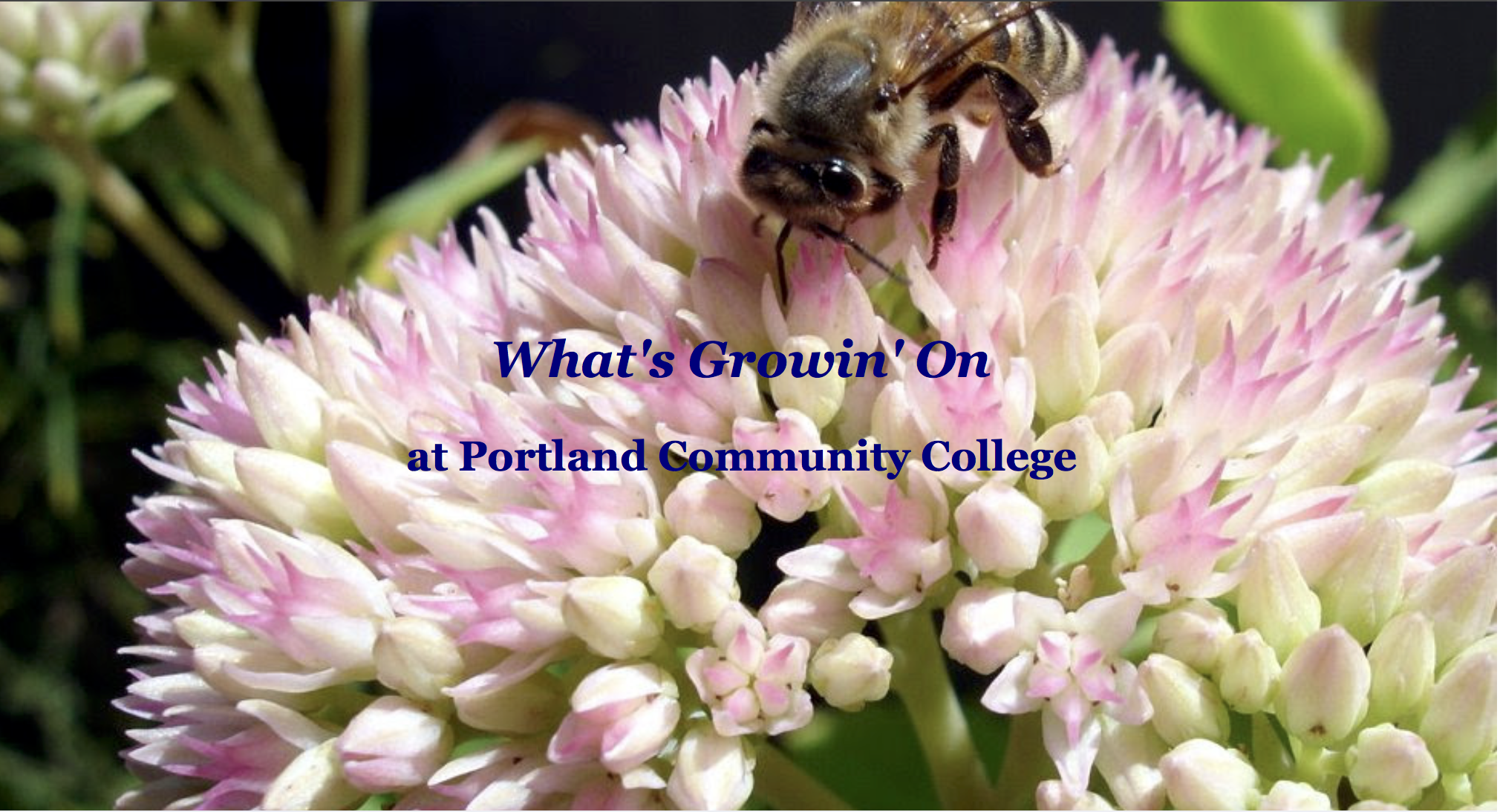 What's Growin' On at Portland Community College