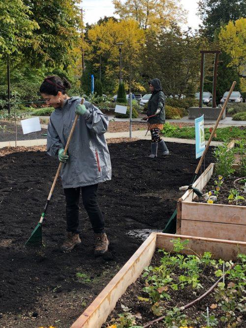 Two volunteers working in the urban garden