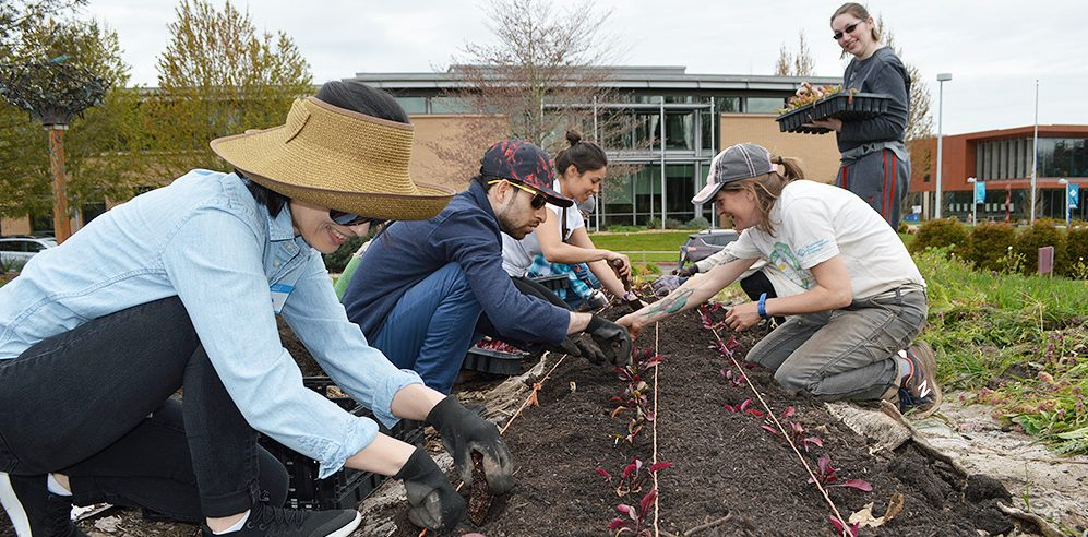 Students transplanting lettuce with the Learning Garden Coordinator