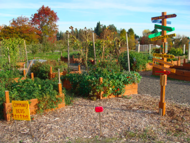 Rock Creek Campus Community Garden