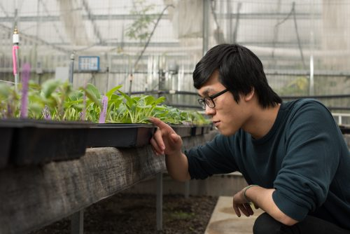 Student looking at seedling plants in a greenhouse