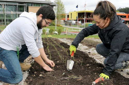 Two students seed a row in the Learning Garden. Besides developing the garden and increasing production, the Sustainability Office has brought in programs and divisions to provide community-based learning opportunities and created on-site classroom collaborations.