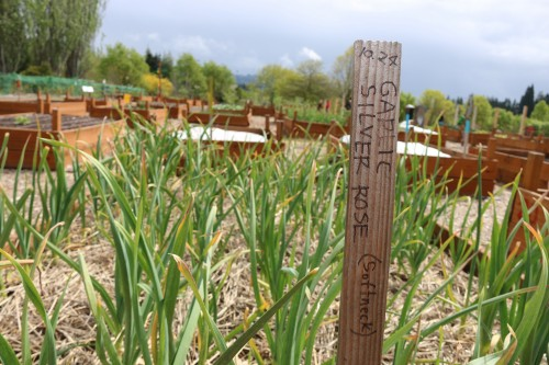 The award-winning Rock Creek Learning Garden is a big piece of PCC's sustainability success.