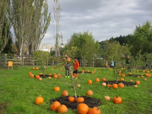 Pumpkins at the Rock Creek Harvest Festival.